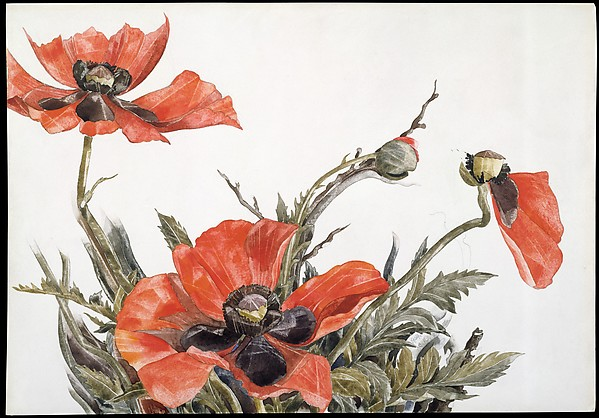 Red Poppies, Charles Demuth (American, Lancaster, Pennsylvania 1883–1935 Lancaster, Pennsylvania), Watercolor and graphite on paper