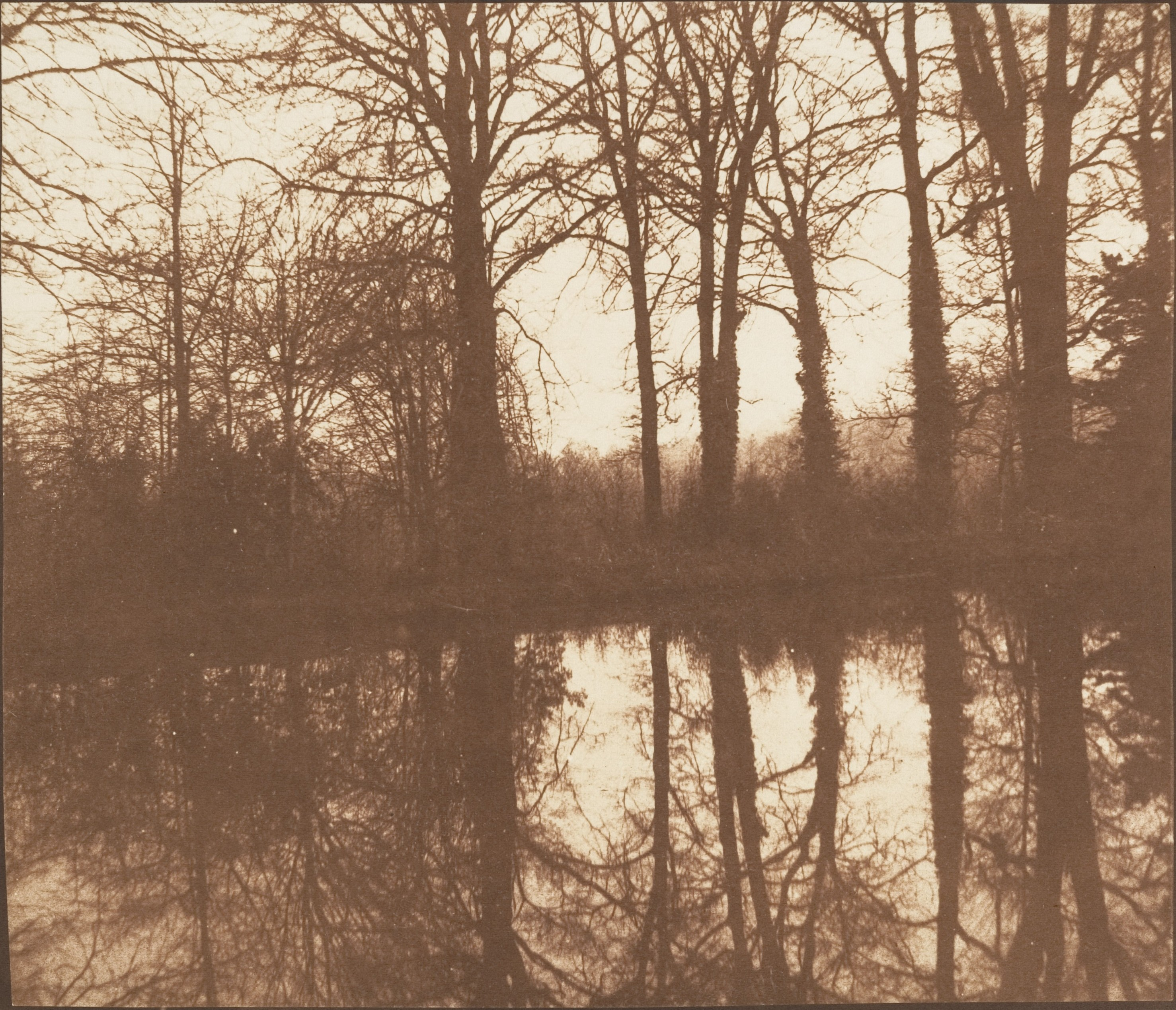 [Winter Trees, Reflected in a Pond]