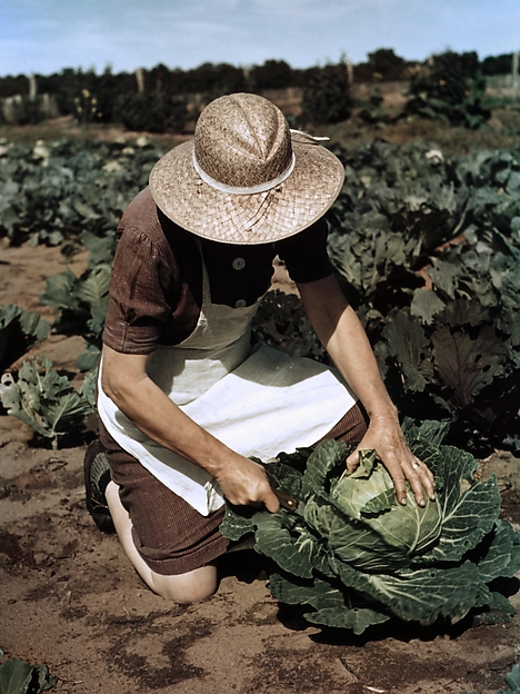 Virginia Norris with Homegrown Cabbage, One of the Many Vegetables Which the Homesteaders Grow in Abundance, Debbie Grossman (American, born 1977), Inkjet print