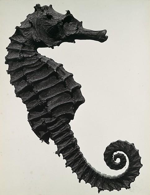 Histoire naturelle, Man Ray (American, Philadelphia, Pennsylvania 1890–1976 Paris), Gelatin silver print