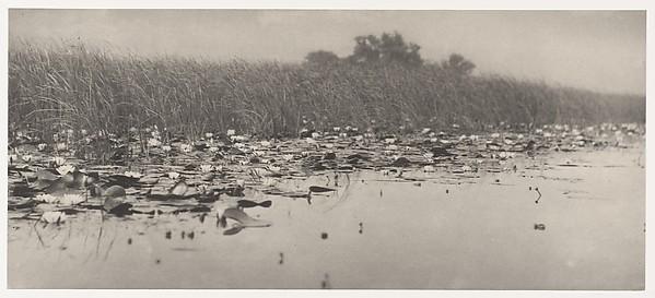 Water-Lilies, Peter Henry Emerson (British, born Cuba, 1856–1936), Platinum print from glass negative