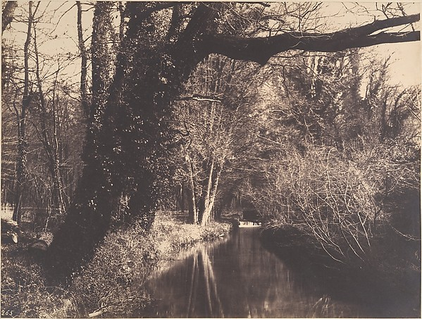 Parc de Courances, Eugène Cuvelier (French, 1837–1900), Salted paper print from paper negative
