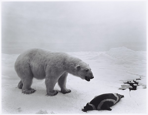 Polar Bear, Hiroshi Sugimoto (Japanese, born Tokyo, 1948), Gelatin silver print