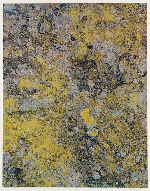 Lichen on Boulder, Between San Javier and Comondu, Baja California, Eliot Porter (American, 1901–1990), Dye transfer print