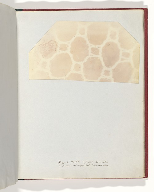Lace in the Solar Microscope, 400 times magnified in surface, William Henry Fox Talbot (British, Dorset 1800–1877 Lacock), Salted paper print