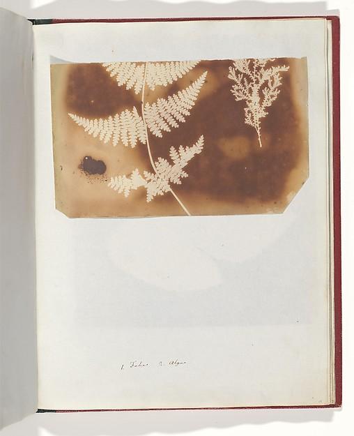 1. Felce. 2. Alga, William Henry Fox Talbot (British, Dorset 1800–1877 Lacock), Salted paper print