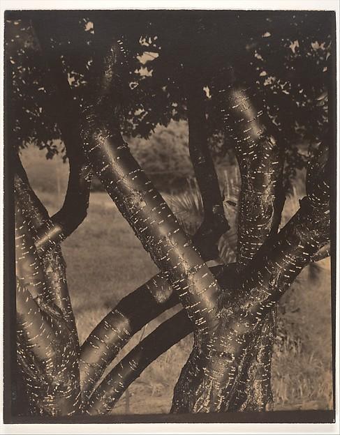 The Dancing Trees, Alfred Stieglitz (American, Hoboken, New Jersey 1864–1946 New York), Palladium print