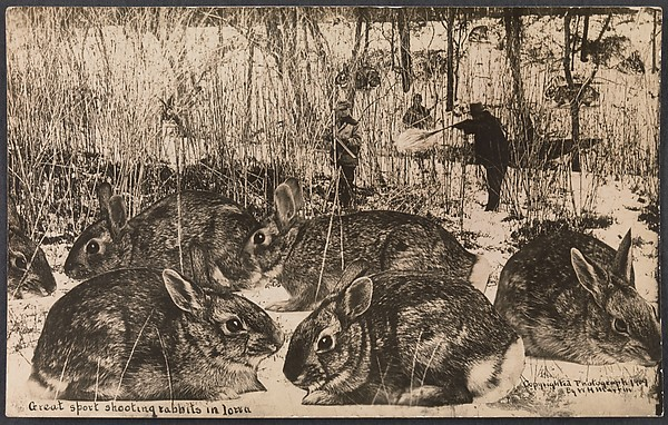 Great Sport Shooting Rabbits in Iowa, William H. Martin (American, 1865–1940), Gelatin silver print