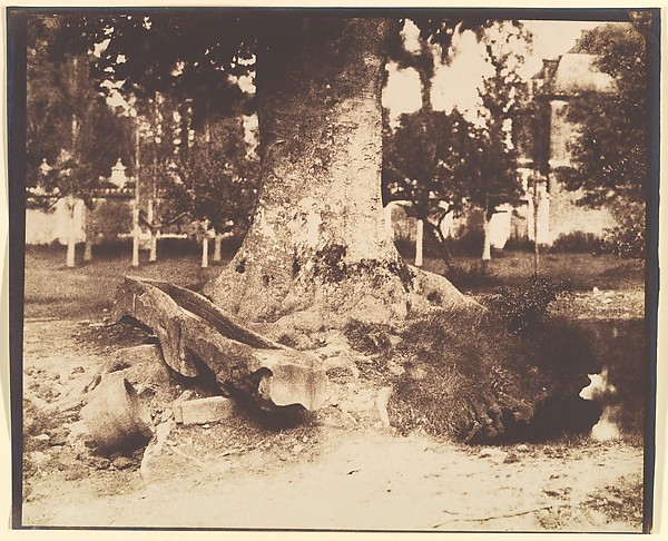 [The Large Tree at La Verrerie, Romesnil], Louis-Rémy Robert (French, 1810–1882), Salted paper print from paper negative