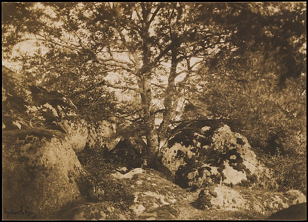 [Oak Tree and Rocks, Forest of Fontainebleau], Gustave Le Gray (French, 1820–1884), Salted paper print from paper negative