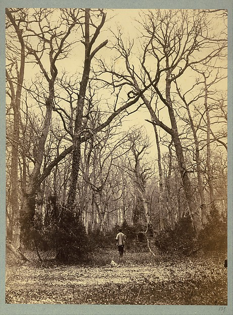 [Man in a Forest Landscape], Constant Alexandre Famin (French, 1827–1888), Albumen silver print from glass negative