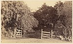 [A Wooden Gateway, a White House, a Country Road, and a Forest Glen], Unknown, Albumen silver print