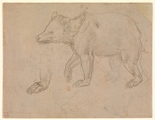 A Bear Walking, Leonardo da Vinci (Italian, Vinci 1452–1519 Amboise), silverpoint on light buff prepared paper