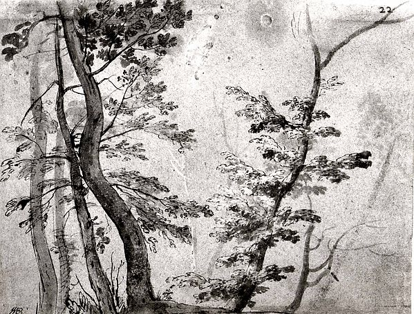 Trees, French artist in the circle of Giovanni Francesco Grimaldi (Italian, Bologna 1606–1680 Rome), Pen, sepia ink and wash with white gouache heightening on blue paper